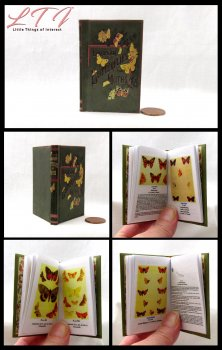 BUTTERFLIES AND MOTHS Illustrated Readable Miniature Scale Book